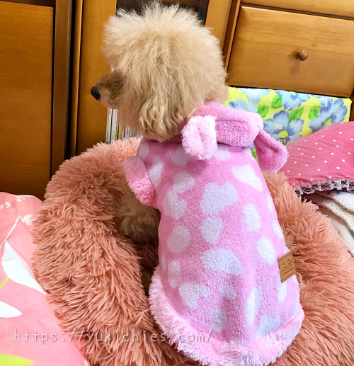 ダイソーDOGWARE ペット服(耳付き、ゆるアニマル、Lサイズ)を着た杏ちゃんの後ろ姿